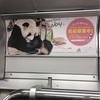 白浜生まれのパンダの名前募集は11月16日まで