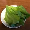 我が家のプランター菜園〜レタスを初収穫、カボチャの苗をゲット〜