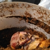 蛹室のキノコ除去
