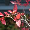 色づく木の葉