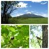 富士山周辺でコムクドリに遭遇!