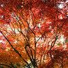 夕張・滝の上公園の紅葉02 2014年10月12日撮影