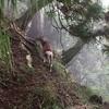 【大山】2016年9月26日 阿夫利神社は雨降り神社? 大山はよくガスるらしい…《日帰り登山》[2回目]