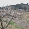 春の花が増えましたねぇ😊