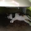 【愛猫日記】毎日アンヌさん#205