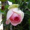 逆境でも咲く花