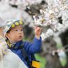 埼玉・越谷の元荒川桜堤で桜のトンネルを楽しむ