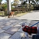 【ペットとお出かけ】奈良県奈良市:奈良公園からならまち周辺をワンコと一緒に散策してきましたー!