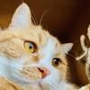 【猫学】猫の鼻が濡れているのはなぜ?問題ない場合と気をつけたい場合があります。