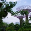 Gardens by the Bay【シンガポール】