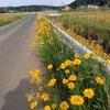 自転車で走りやすい道を探して走ってみて思ったこと 自転車で走りやすい道路はどこにある?