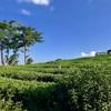 チェンライの絶景茶畑カフェ「チュイフォン」と華人&山岳民族の町メーサロンの巻【チェンライ旅行 5】