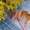 子犬の下痢と嘔吐への対応の反省