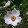 花の優しさ