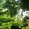 緑色の羽根