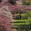 宇治市植物公園(八重桜無料公開)