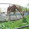 2010年当時の 行動展示「旭山動物園」ダイブする白熊、空を飛ぶペンギン、吊り橋を渡る?レッサーパンダ