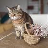 小さな幸せがポストに届いた!お花の定期便ブルーミーでドライフラワーの花束ができました