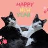 新年のご挨拶と大晦日。