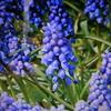 3月24月誕生日の花と花言葉