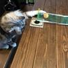 【運動不足解消!】自宅リビングで卓球をやってみたら意外と楽しかった
