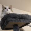 のんびりライフのひまりちゃん!我が家のお猫様ひま日記12