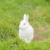 米で話題沸騰中の 「The Rabbit Effect」とは?  Dr. Kelliが社会に望んでいること