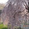 4月25日(土)驚き桃の木桜の木