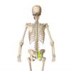 出産後、腰痛(骨盤痛)は治る?