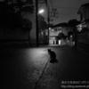 X-E3のACROSがとても良い!深夜の野良猫でテスト撮影【レビュー・作例】