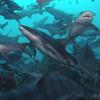 世界の海で出会った魚図鑑【ドチザメ】