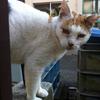 野良猫の病気とは?人や家猫に感染するの?