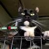 実家の猫が家出した!迷い猫になってしまった時にまずやったこと。
