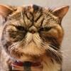 半魚人【シェイプ・オブ・ウォーター】聖なる猫殺し|2018年アカデミー賞
