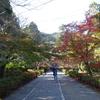 ミモザ・ガーデンの日記 二尊院の紅葉