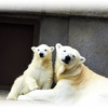 円山動物園は完全予約制になりました!~GWのお出かけ情報~