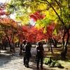 見頃を迎えた平林寺の紅葉〜広大な境内林が染まる!