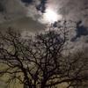 満月のナイトウォーク。