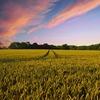 雨が多い夏だったけれども、それでも収穫の秋はやってくる