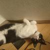 今日の黒猫モモ&白黒猫ナナの動画ー788