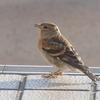 あっ鳥! という名の鳥でした。