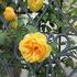 町の中の花々7