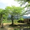 京都 真夏の大覚寺大沢池と嵯峨広沢の池を楽しむ!