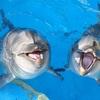 【話してみよう Japaneseライフ】イルカ漁 dolphin fishing