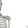 身体は筋膜でつながっている|治療で全身評価していく方法教えます