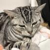 世間の人に知ってもらいたい滋賀でおこっている猫事件簿。