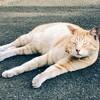 プチトリップの旅!猫づくし、鶴見線。