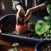 【肥料の交換】レモンバームの新芽発見!越冬に向けて準備しました。