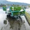 営農体験ルポ2、田植えと生産性