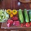 【家庭菜園】2週間ぶりのジャングル畑からの収穫物!